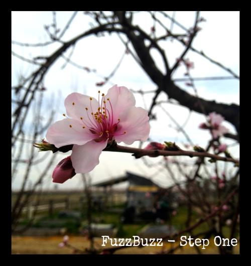 FuzzBuzz-StepOne.png