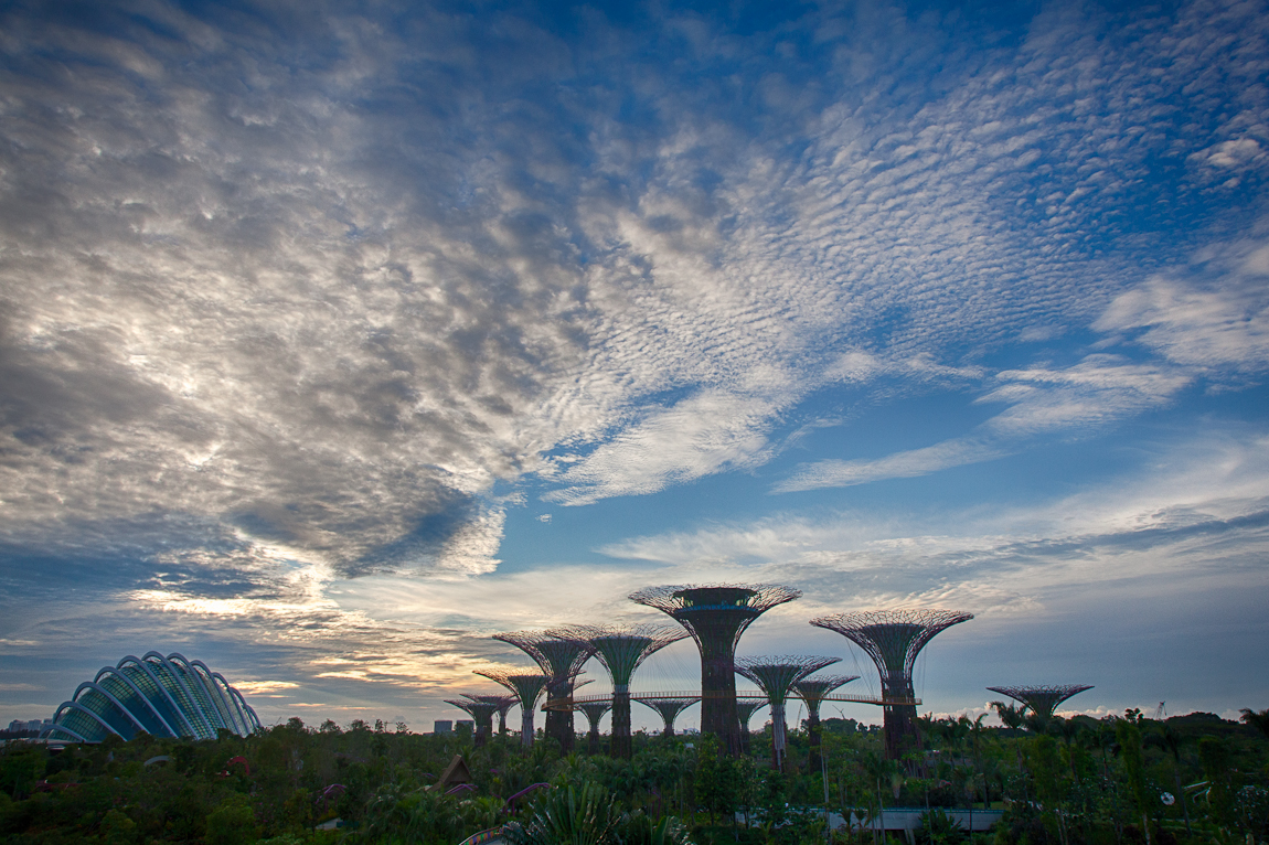 Early Morning in the Gardens by the Bay