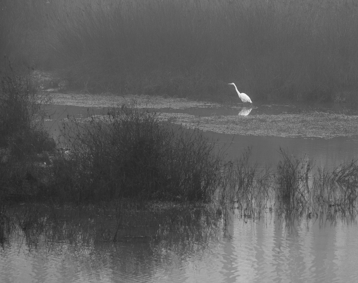 Black and white view of Delta Ponds along Willamette River in Eugene.