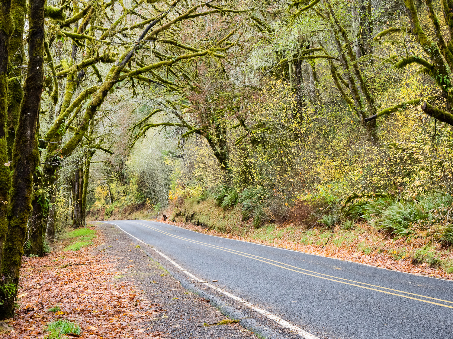 Alsea Highway in Autumn