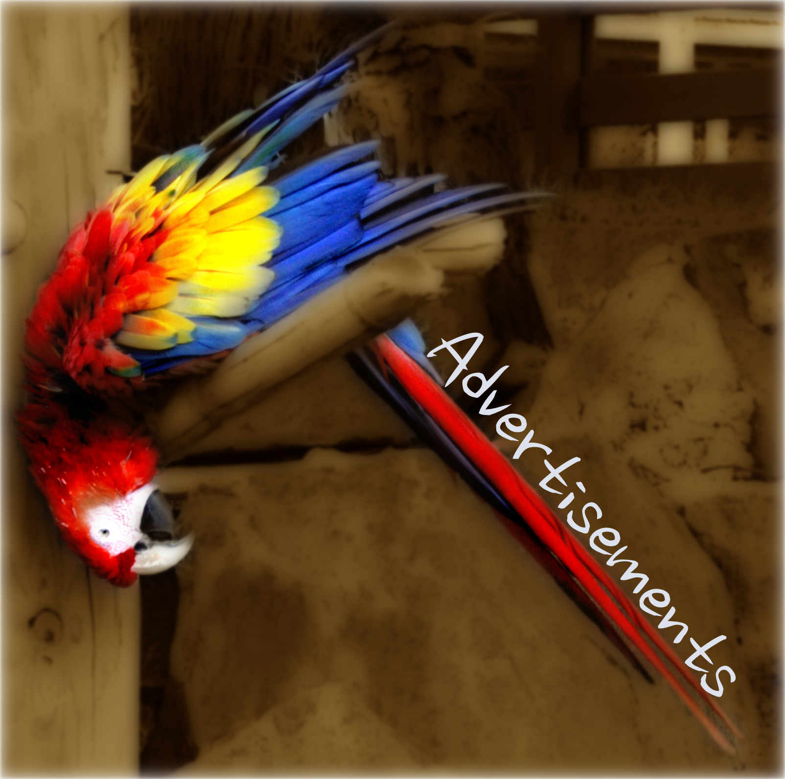 Parrot - Ads.png