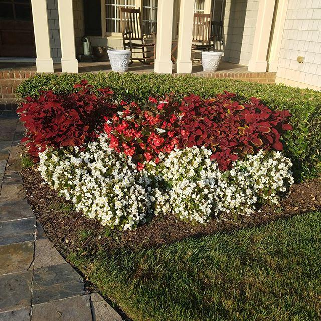 #lawncare #quality #lawnmaintenance  #beautiful #lawn #beautifullawn  #mowing #grass #edging  #flowers #manuelweeding #weeding #pruning #mulch #pinestraw #trimming #bushes  #leafremoval #branchesremoval  #debrisremoval #Wakeforest  #Garner #Raleigh #Cary #northcarolina #LMP #LMPlawncare