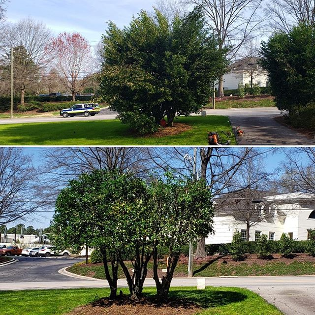 #spring2019 #lawncare #quality #lawnmaintenance  #beautiful #lawn #beautifullawn  #mowing #grass #edging  #flowers #manuelweeding #weeding #pruning #mulch #pinestraw #trimming #bushes  #leafremoval #branchesremoval  #debrisremoval #Wakeforest  #Garner #Raleigh #Cary #northcarolina #LMP #LMPlawncare