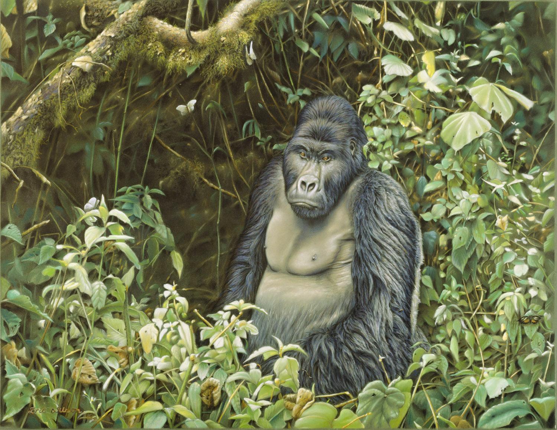 Gorilla in Zaire