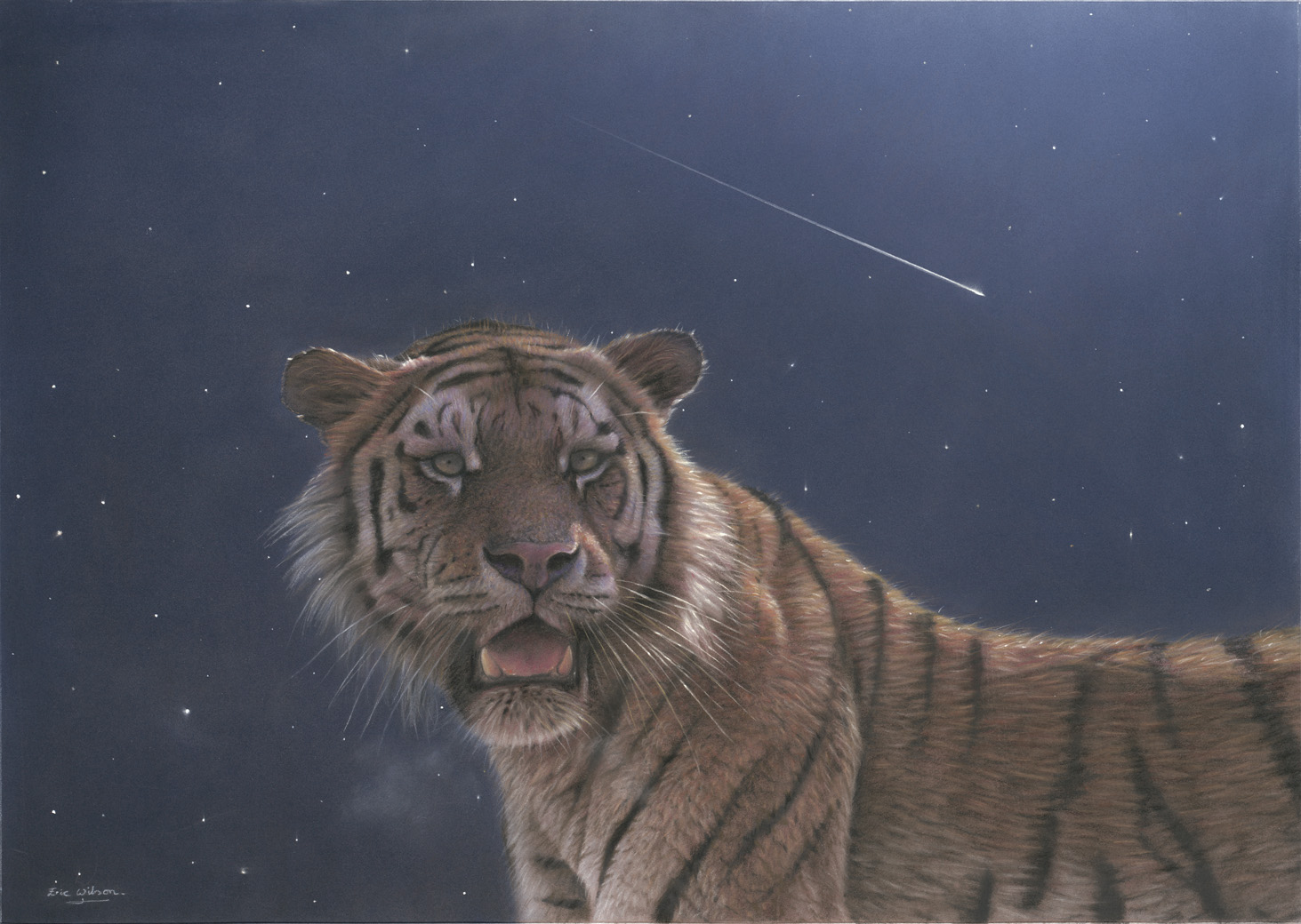 Falling Star - Female Amur Tiger