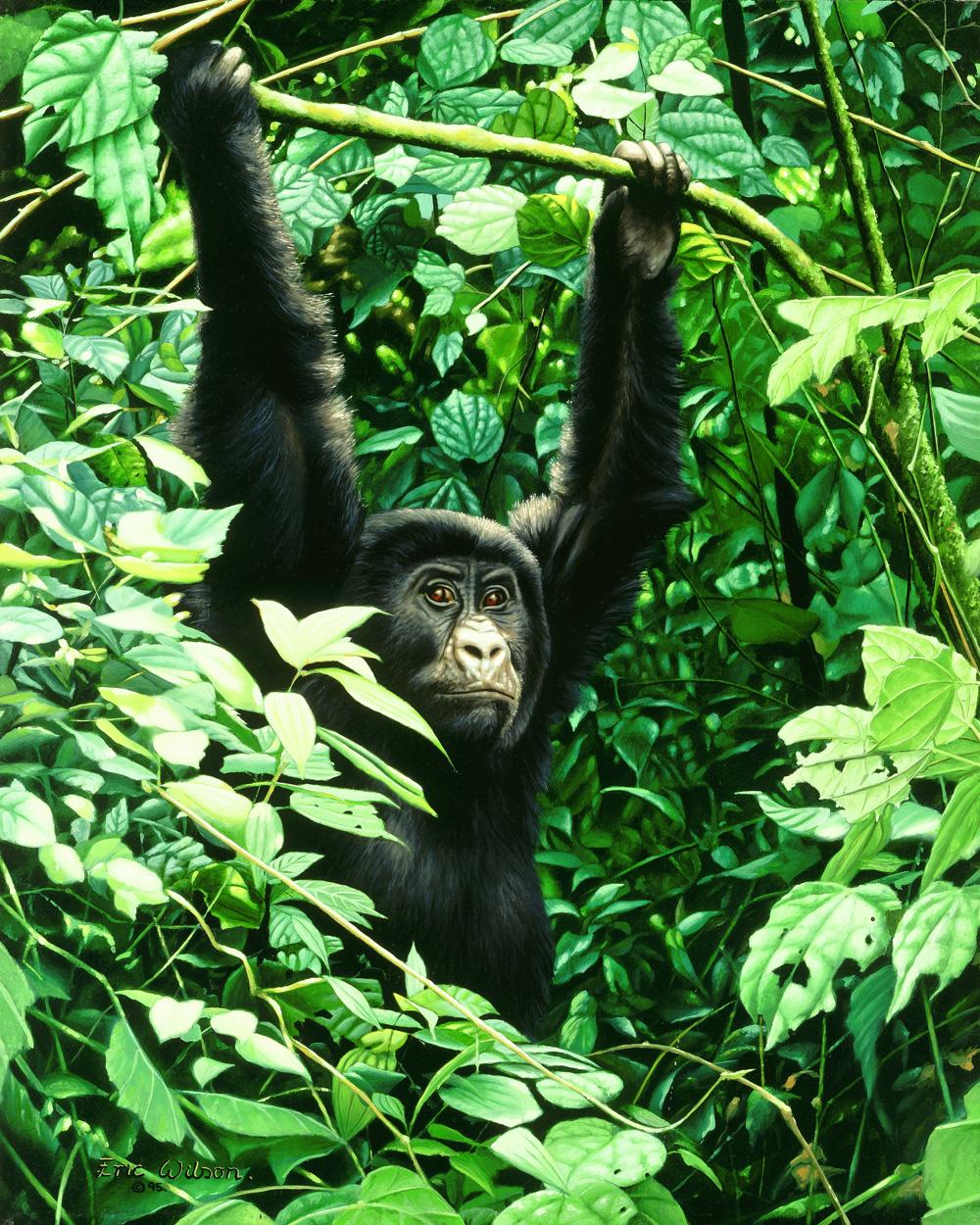Juvenille Gorilla painting