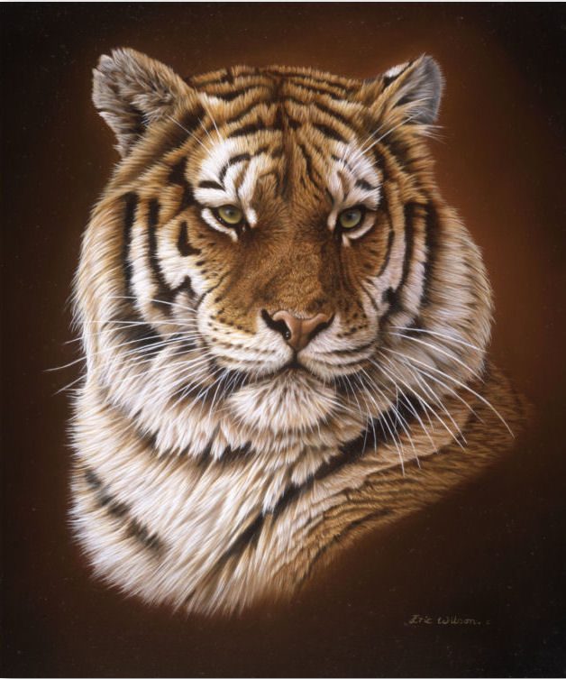 Royal Bengal Tiger Portrait
