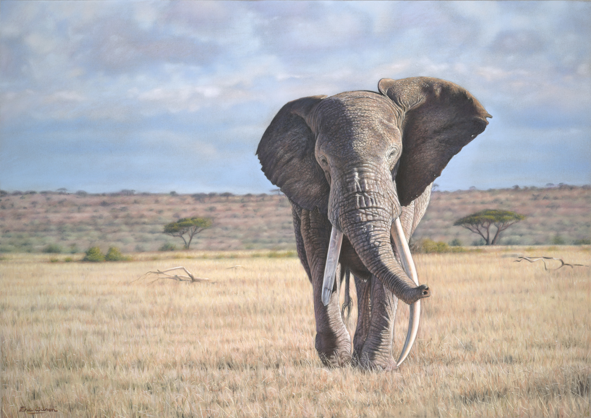 Pastel painting of an African Elephant by wildlife artist Eric Wilson