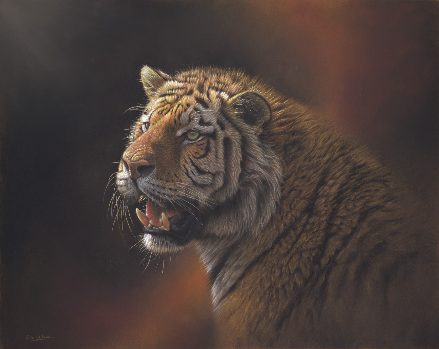 Eye Of The Storm -Amur Tiger