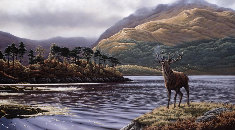 Loch Sunart Stag
