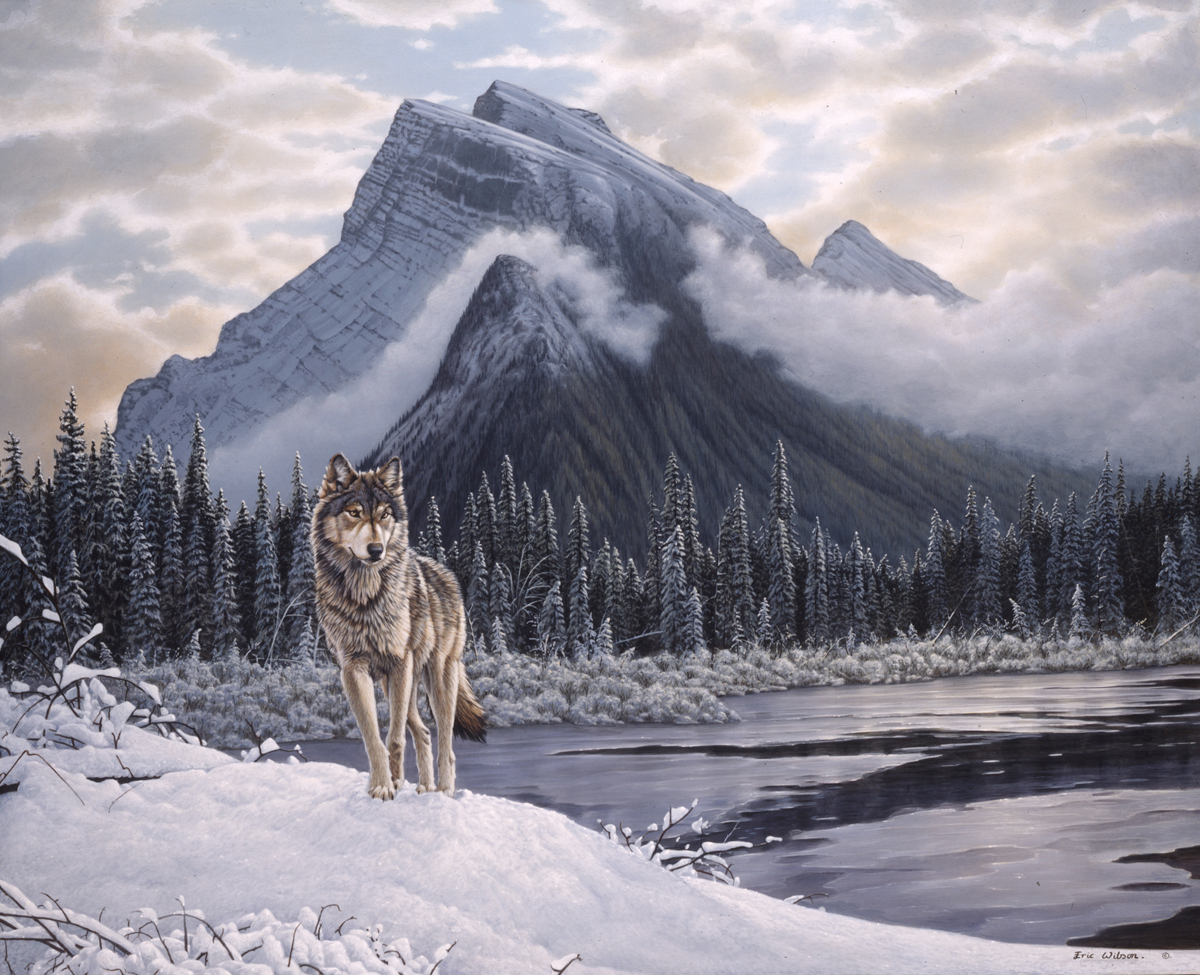 Lone Wolf-Mount Rundle