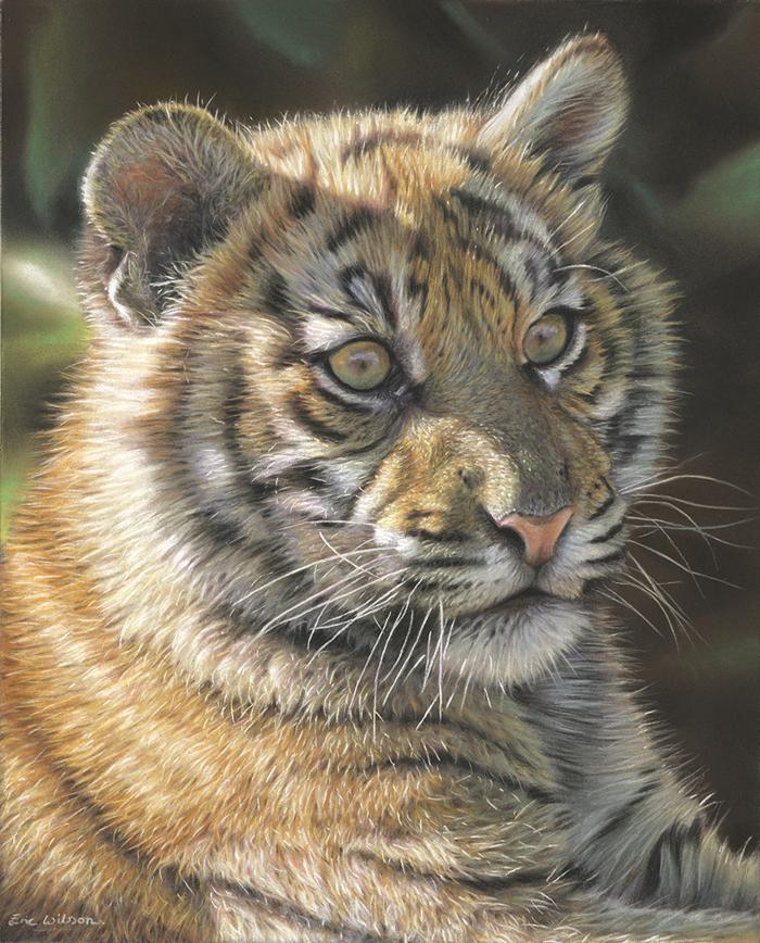 Sumatran Tiger Cub in Pastel by Wildlife Artist Eric Wilson. Pastel Art 12 x 10 inches. SOLD.