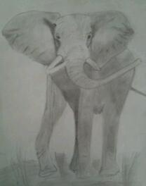 Elephantdrawing.jpg