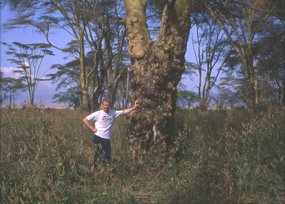 Leopard research in Ngorongoro crater with wildlife artist Eric Wilson. Research work for leopard paintings.