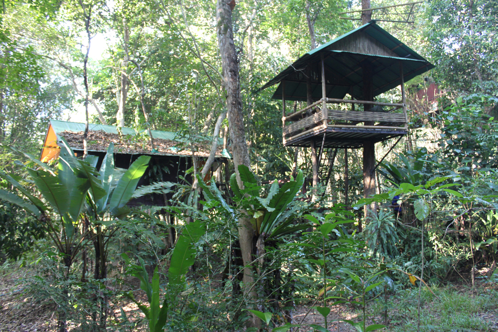 Tree House, Khao Sok Rainforest, Thailand. Tigers roam these forests, along with the clouded leopard and the Great Hornbill. Wildlife Artist Eric Wilson stayed in this tree house in the jungle to observe the wildlife.