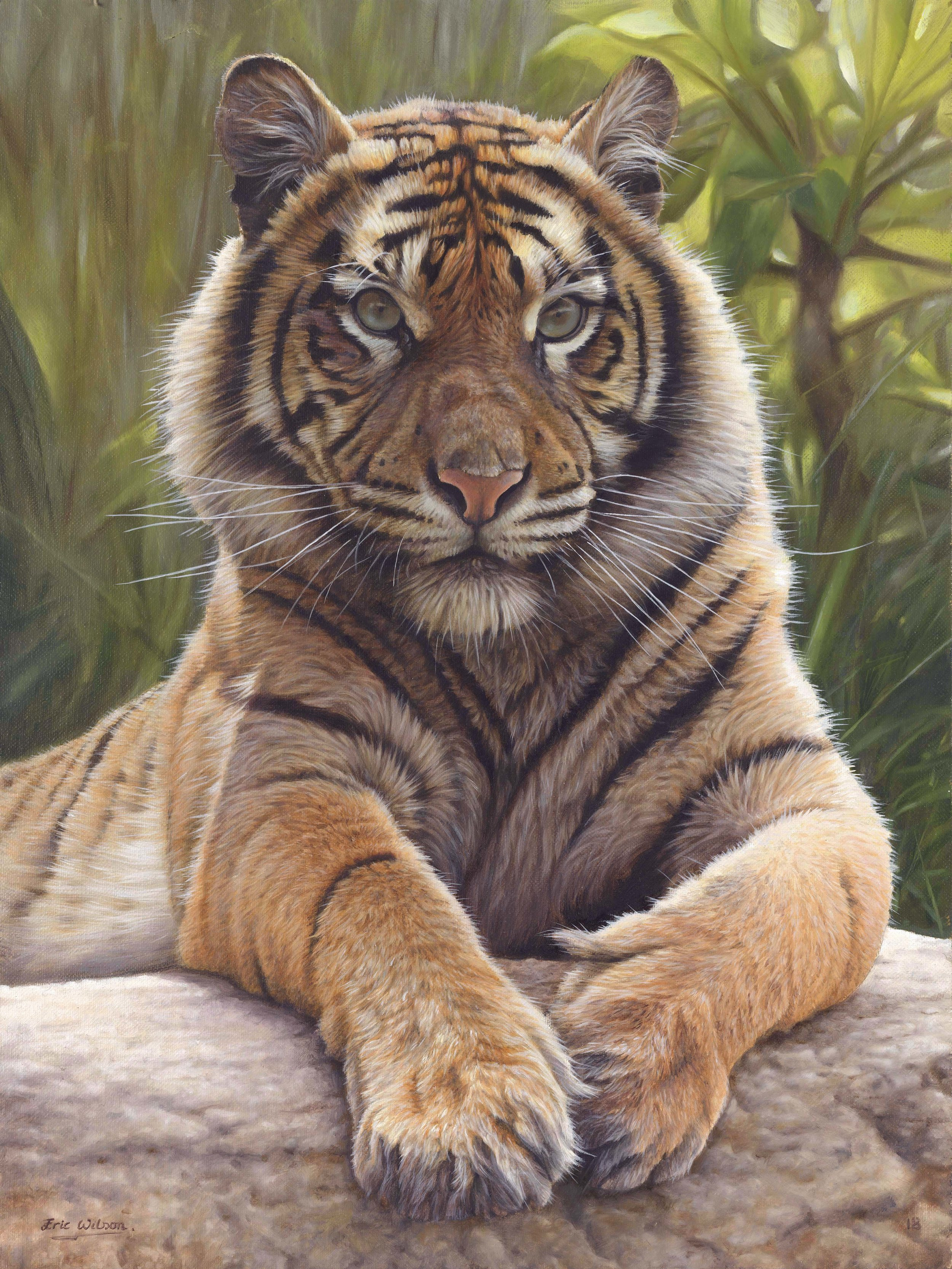 Sumatran Tiger 2018ADJ3.jpg