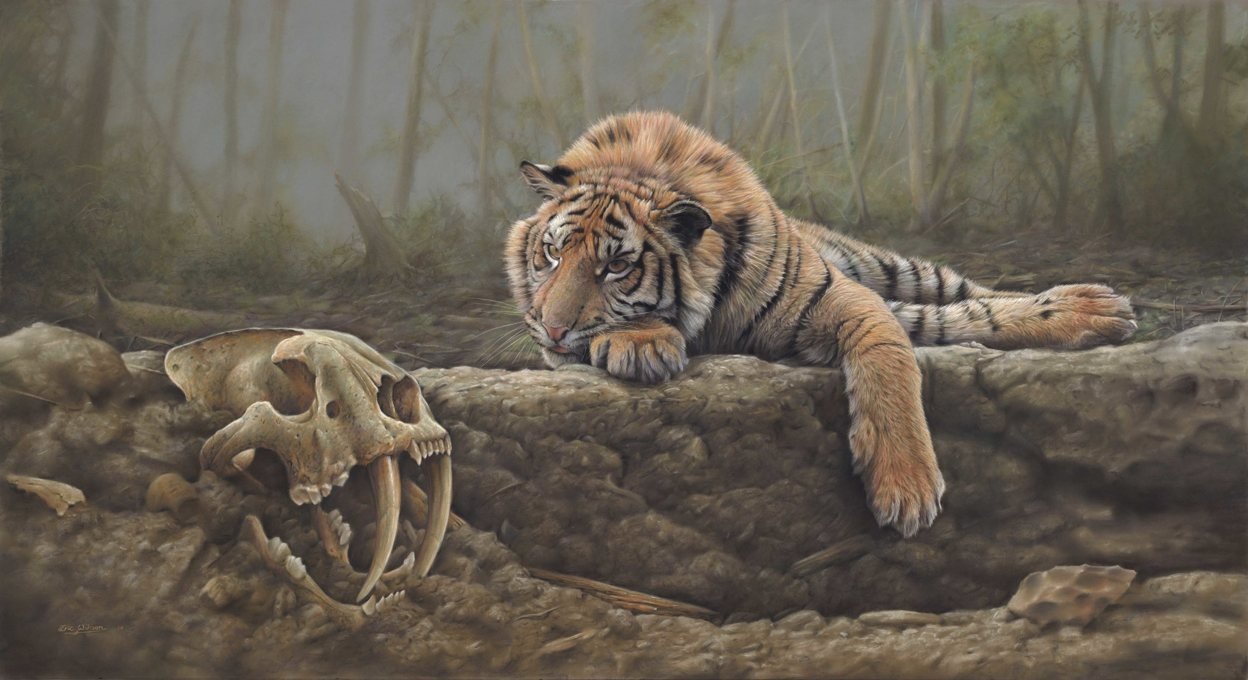 'Where Tigers Pray' - Pastel.  'Where Tigers Pray' is a painting I've had in my mind for many years and I'm happy that I found time to paint it over the Christmas period. I imagined a tiger captivated by a strange artifact before him; The skull of an extinct sabertooth tiger that had been unearthed by an eroding riverbank. It was originally conceived with the title 'Or not to be' as a question mark hanging over the fate of all big cats past and present, but as the painting began to take shape the strong connection between the tiger and his long extinct ancestor began to take on a spiritual quality all of its own, and the ground upon which he lay, appeared to me to be in more of a secret, sacred place, an altar even, known only to tigers, and hence the title 'Where Tigers Pray' It is a fantasy piece, but I like that quality in a painting. I hope you do too.