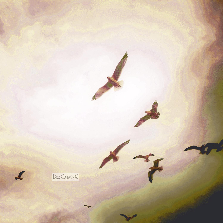 2.SeagullsBunch copy.jpg