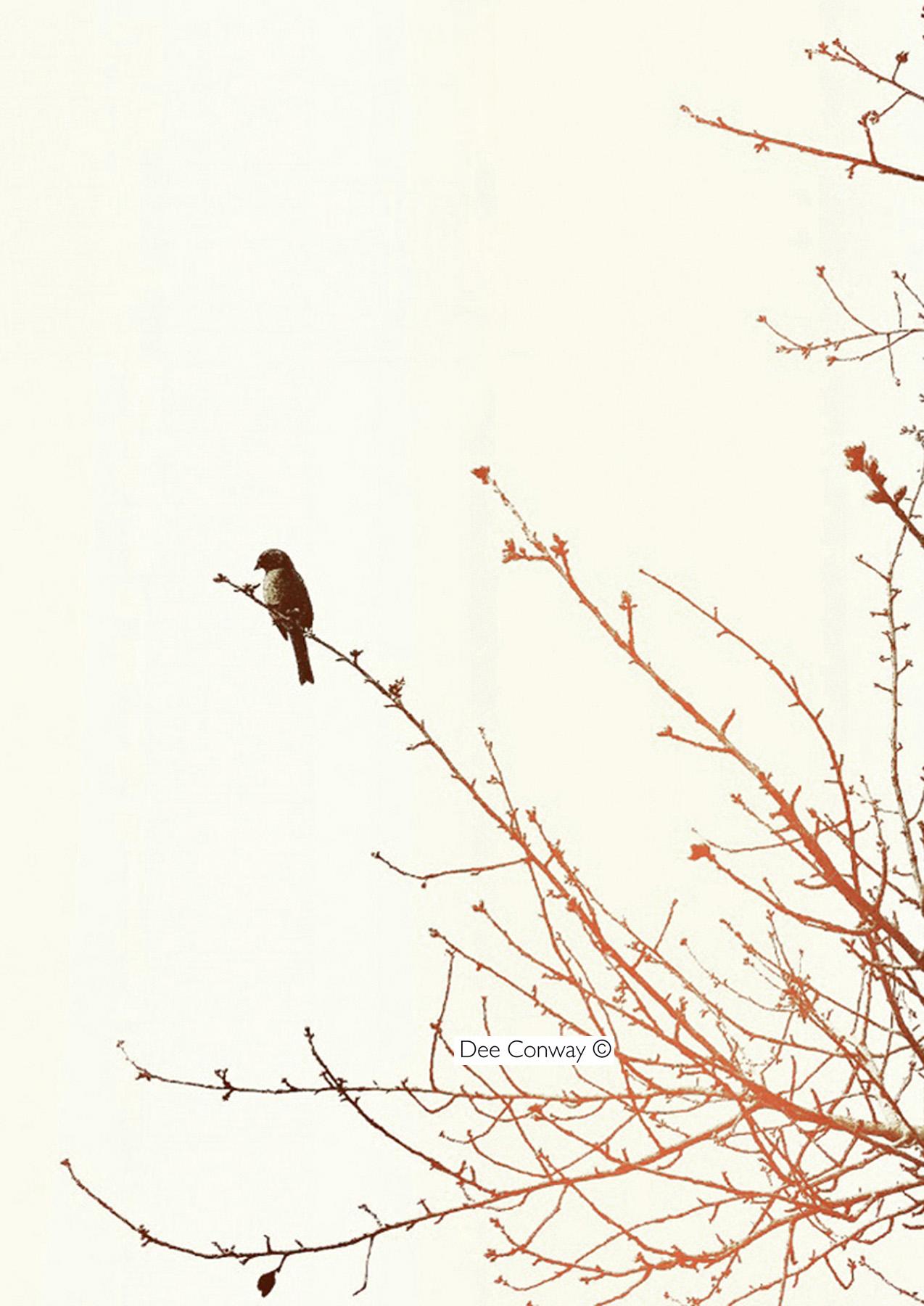 5.BirdOrange copy.jpg