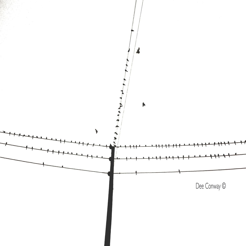 7.BirdsOnPole&Wire copy.jpg