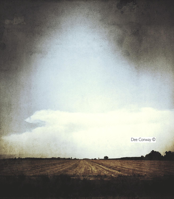 1.Farmland copy.jpg