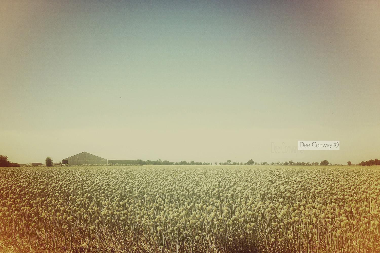 13.Grain.jpg