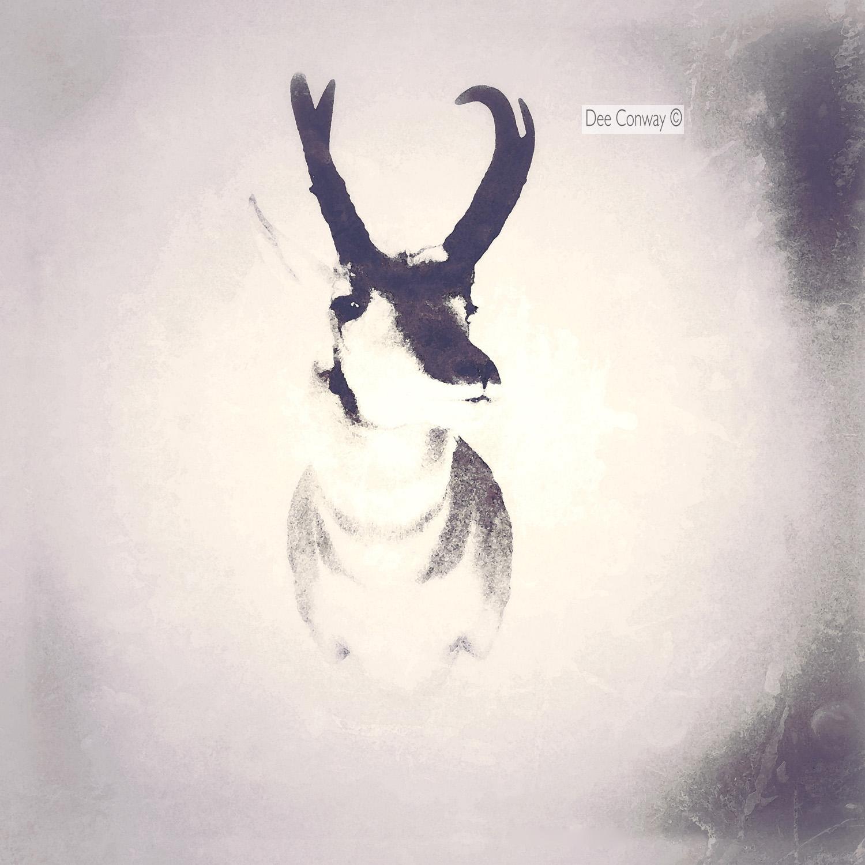 Antelope copy.jpg