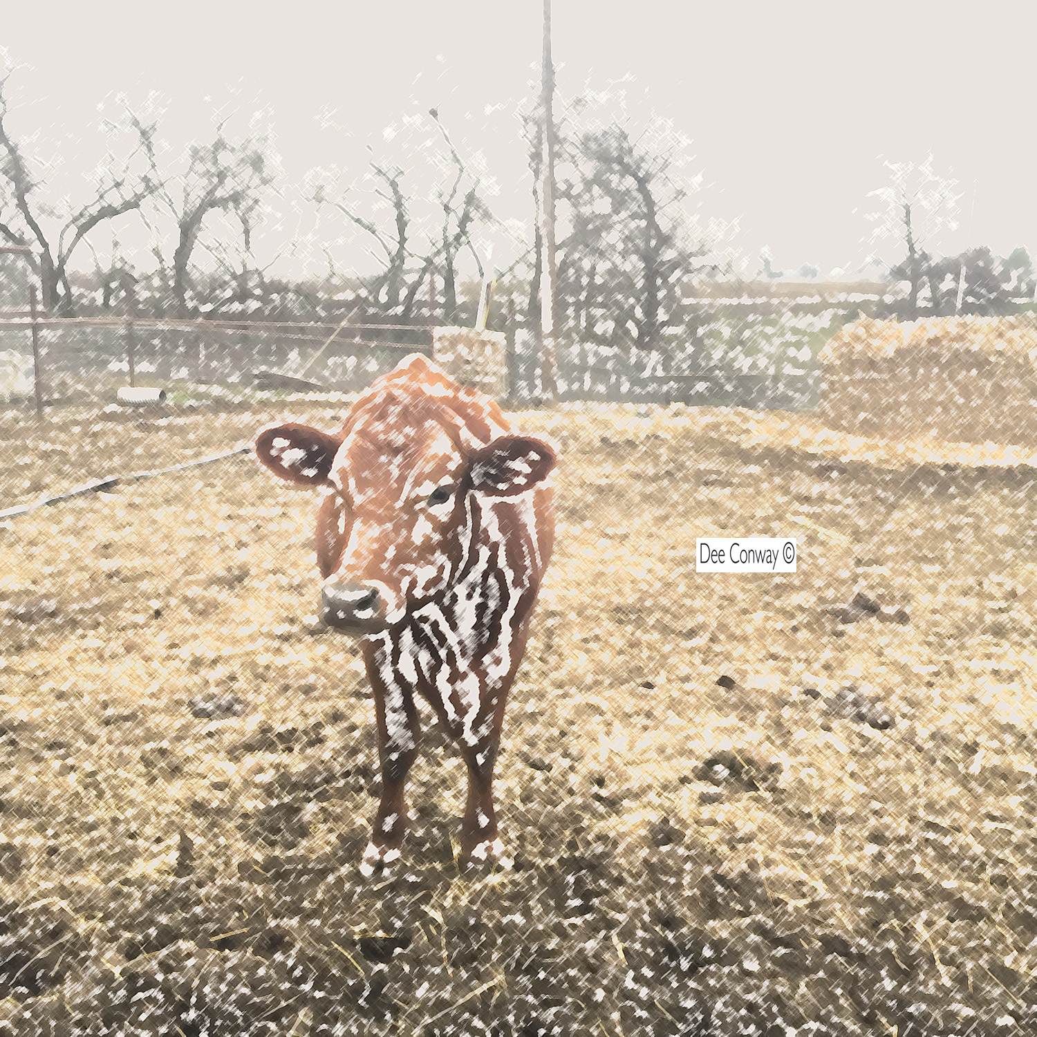 - a different type of cow