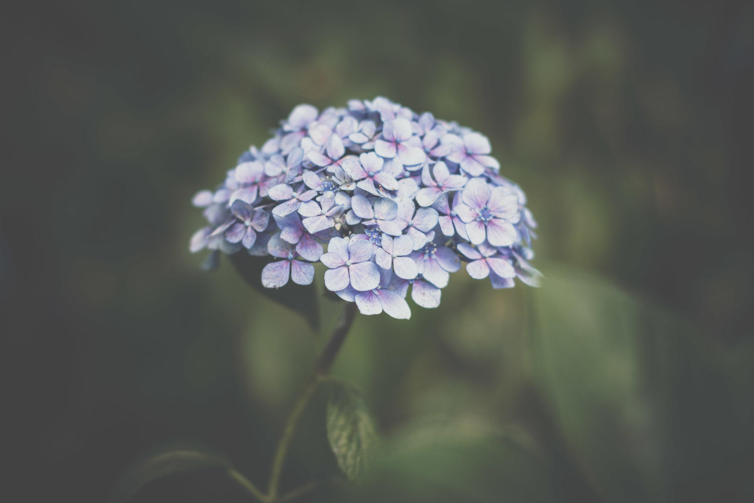_MG_9532-2.jpg