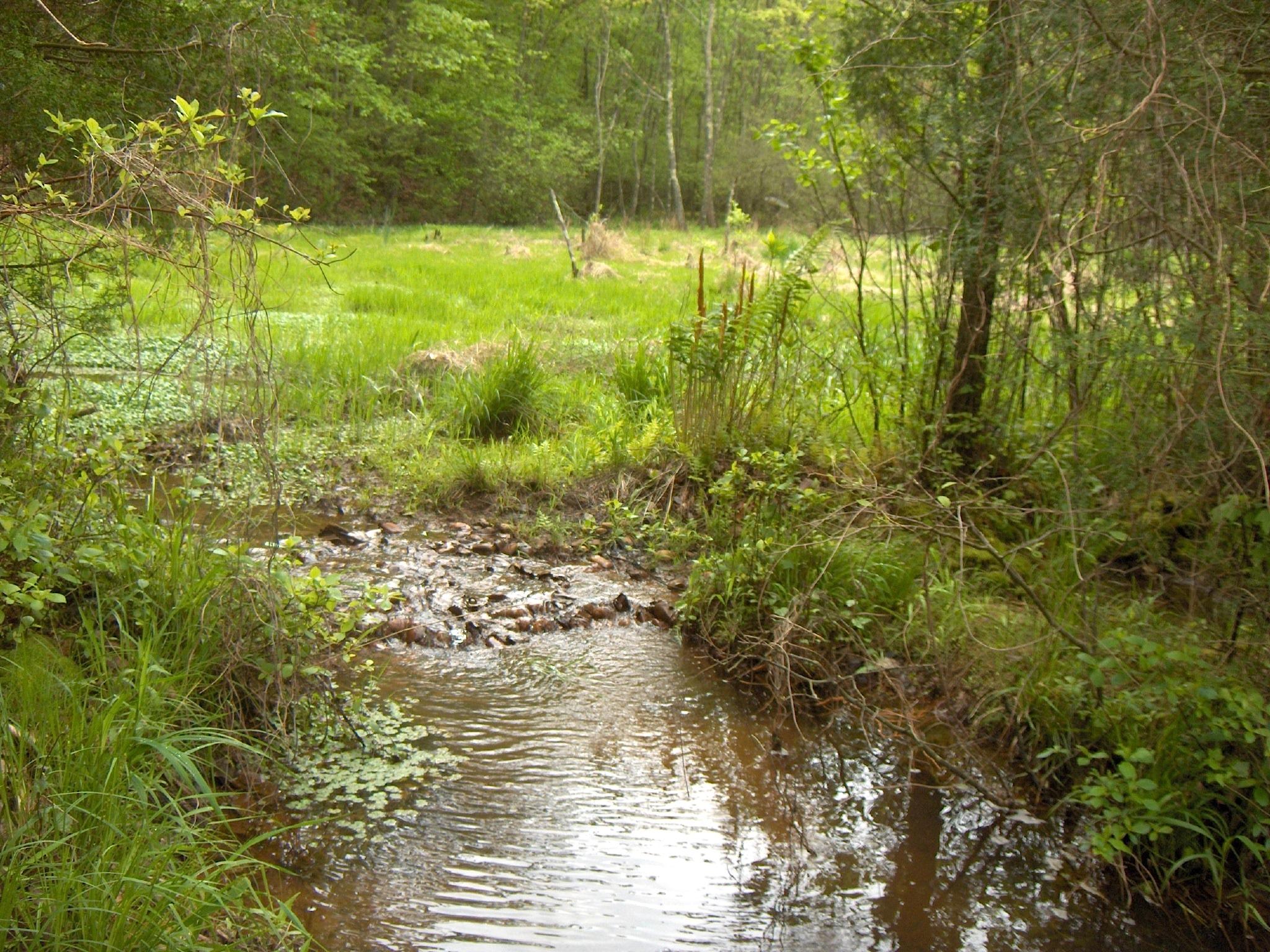 Howard's Branch Sand Seepage Wetland installed in 2001 in Brewer's Creek Watershed