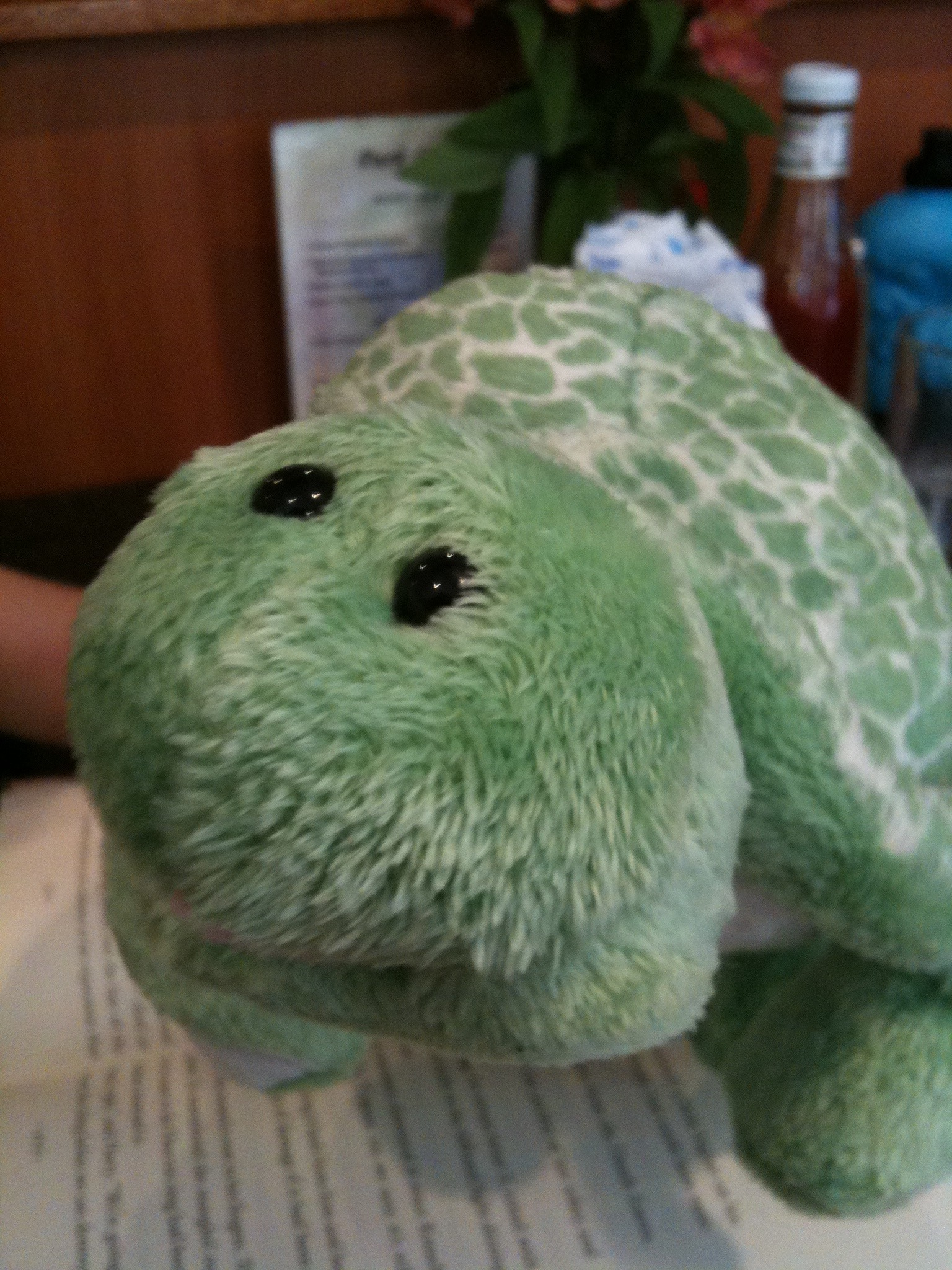 This is my daughter's Webkinz turtle Greenie, at the Park Cafe on 7th Avenue.
