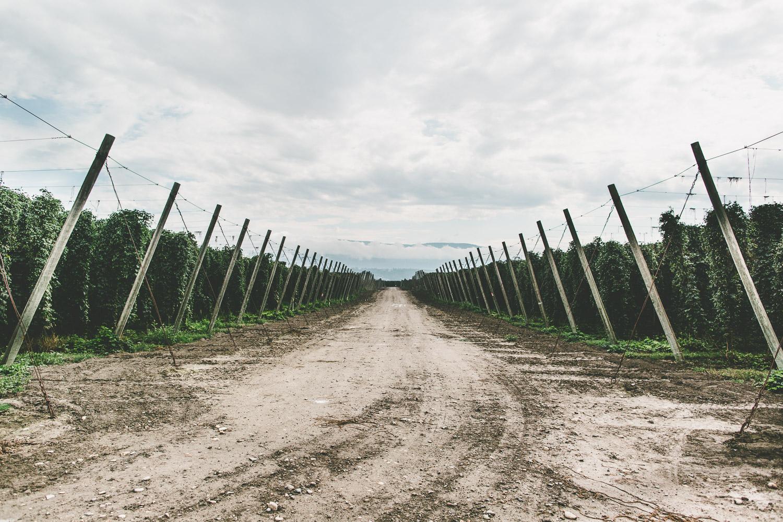 Over 40 varieties on 1,700 acres