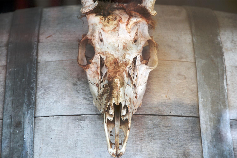 lake drum - skull.jpg
