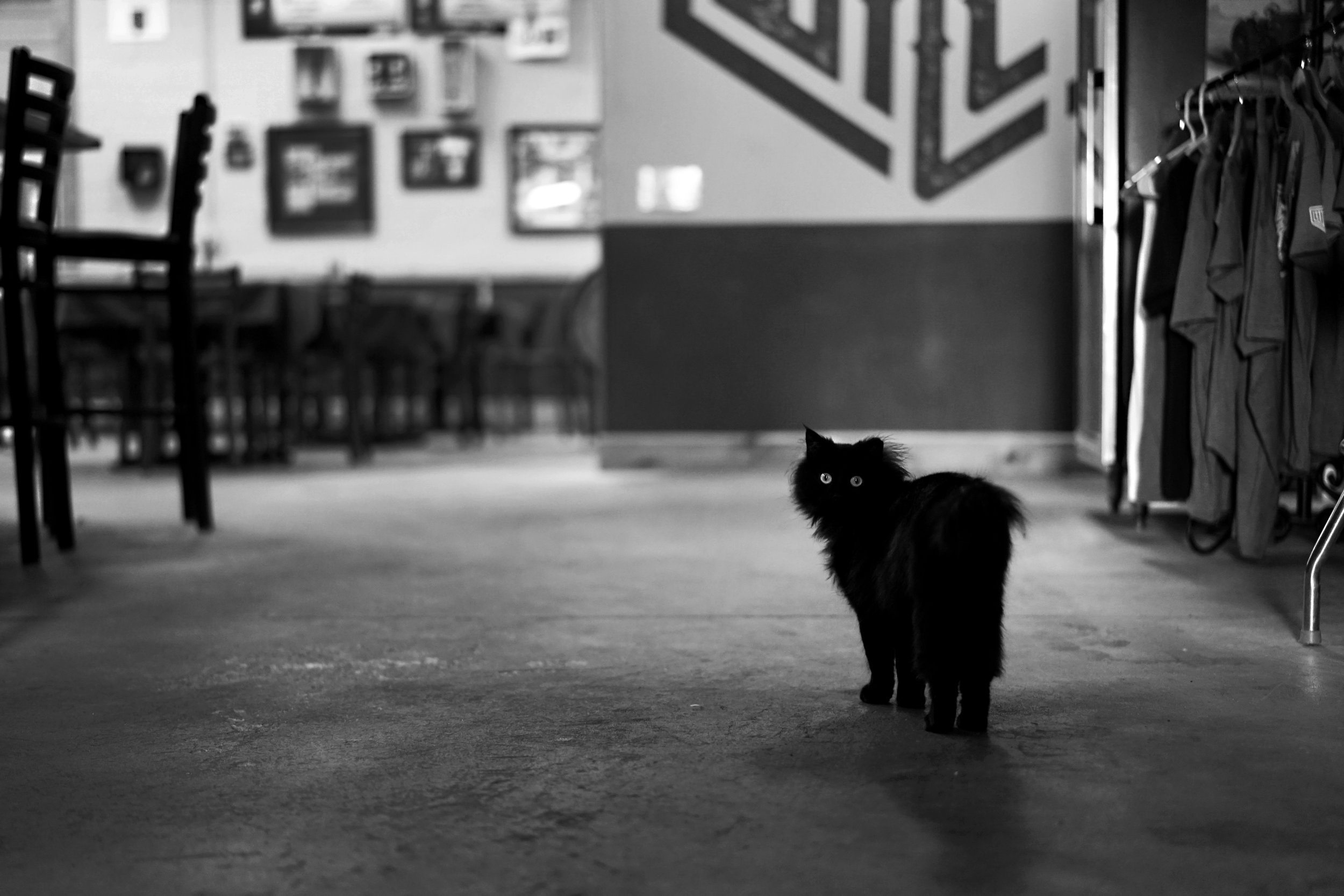 Wiley Roots Midnight the Brew Cat 01.jpg
