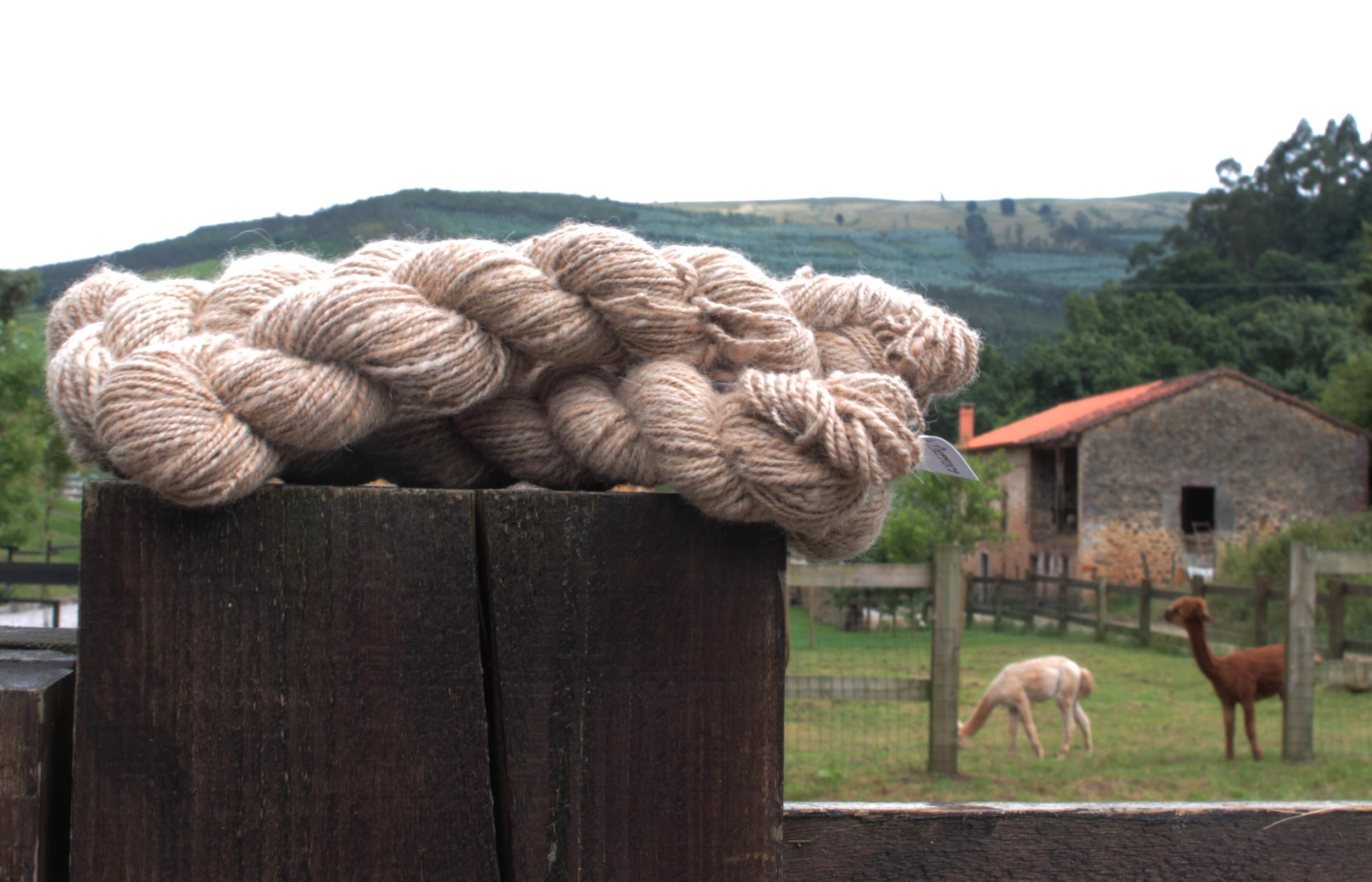 Visita Alpacas de la Tierruca  © trikoarte, 2013