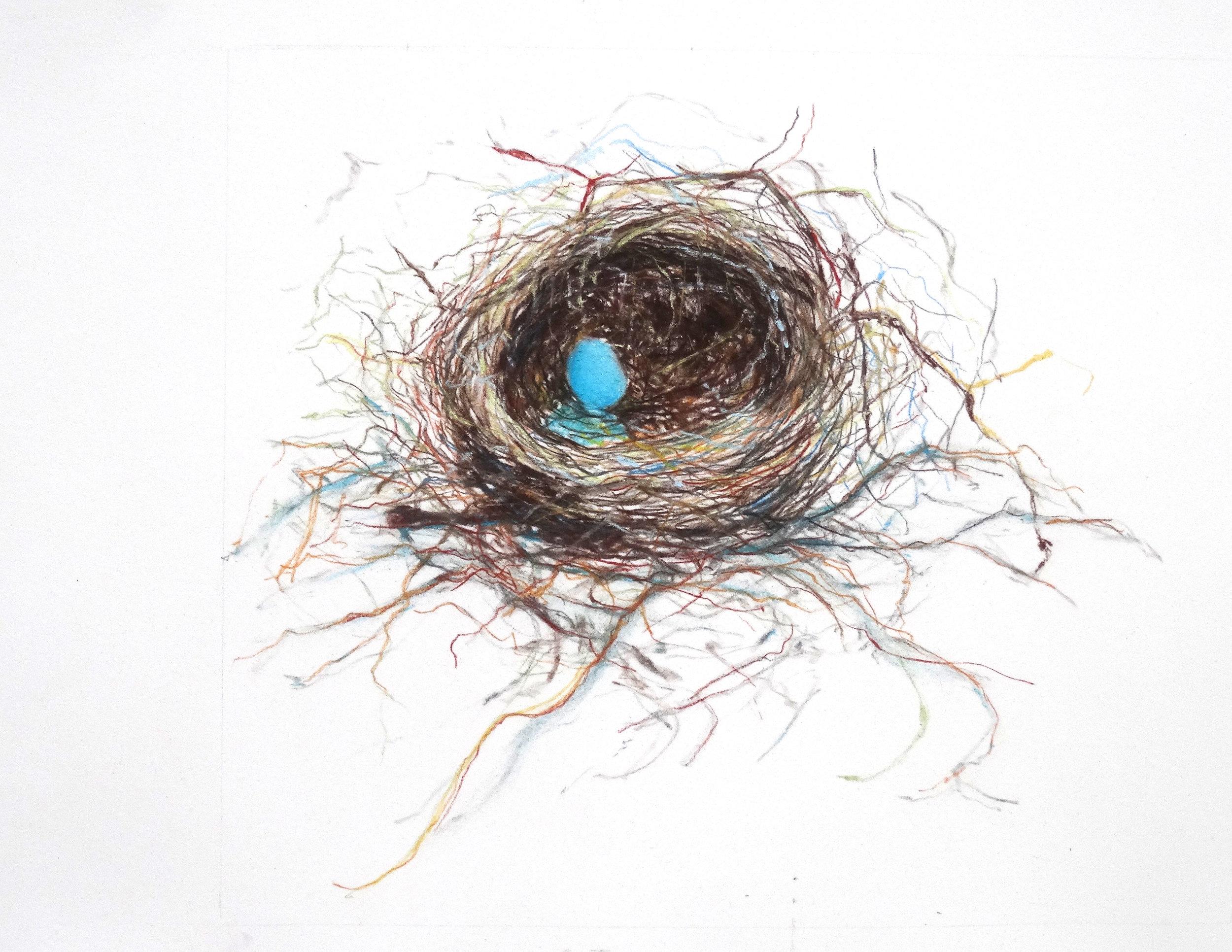 Fragile nest robin's egg