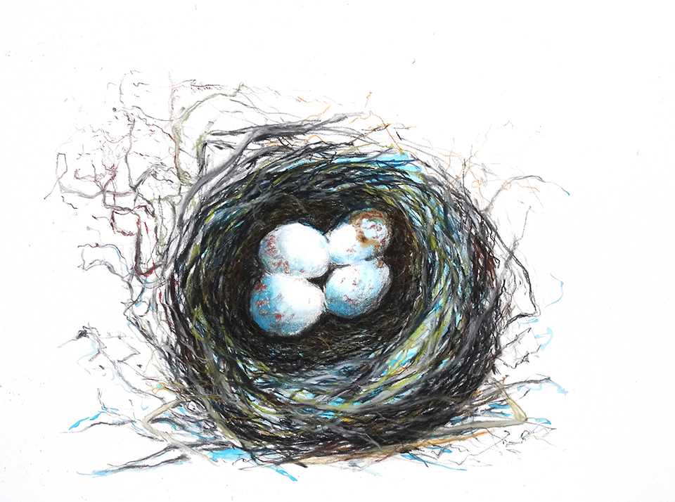 Three blue eggs in nest