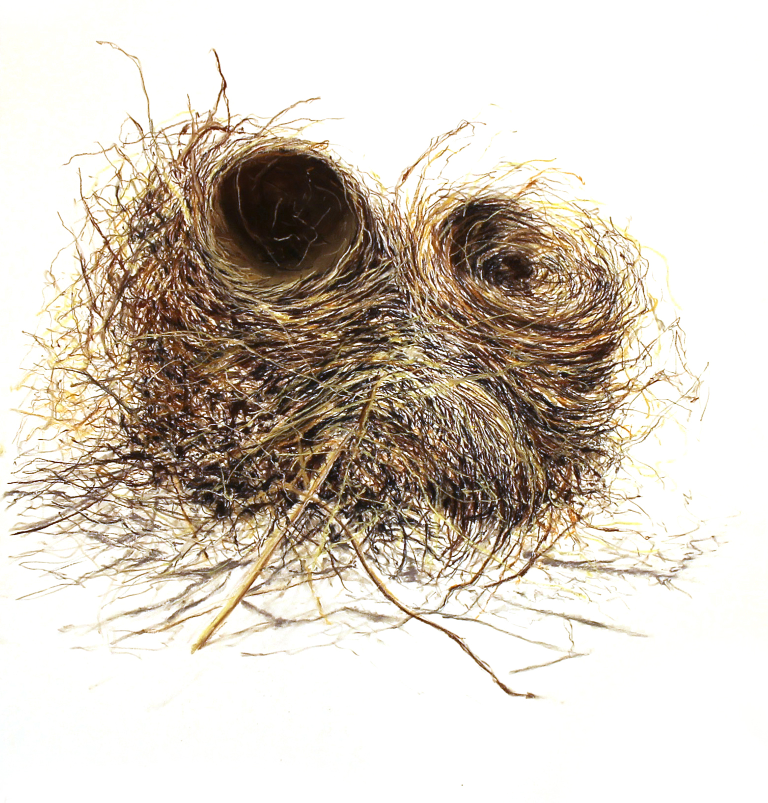 Mrs. Robin's Double Nest, conte and charcoal on paper. 2016