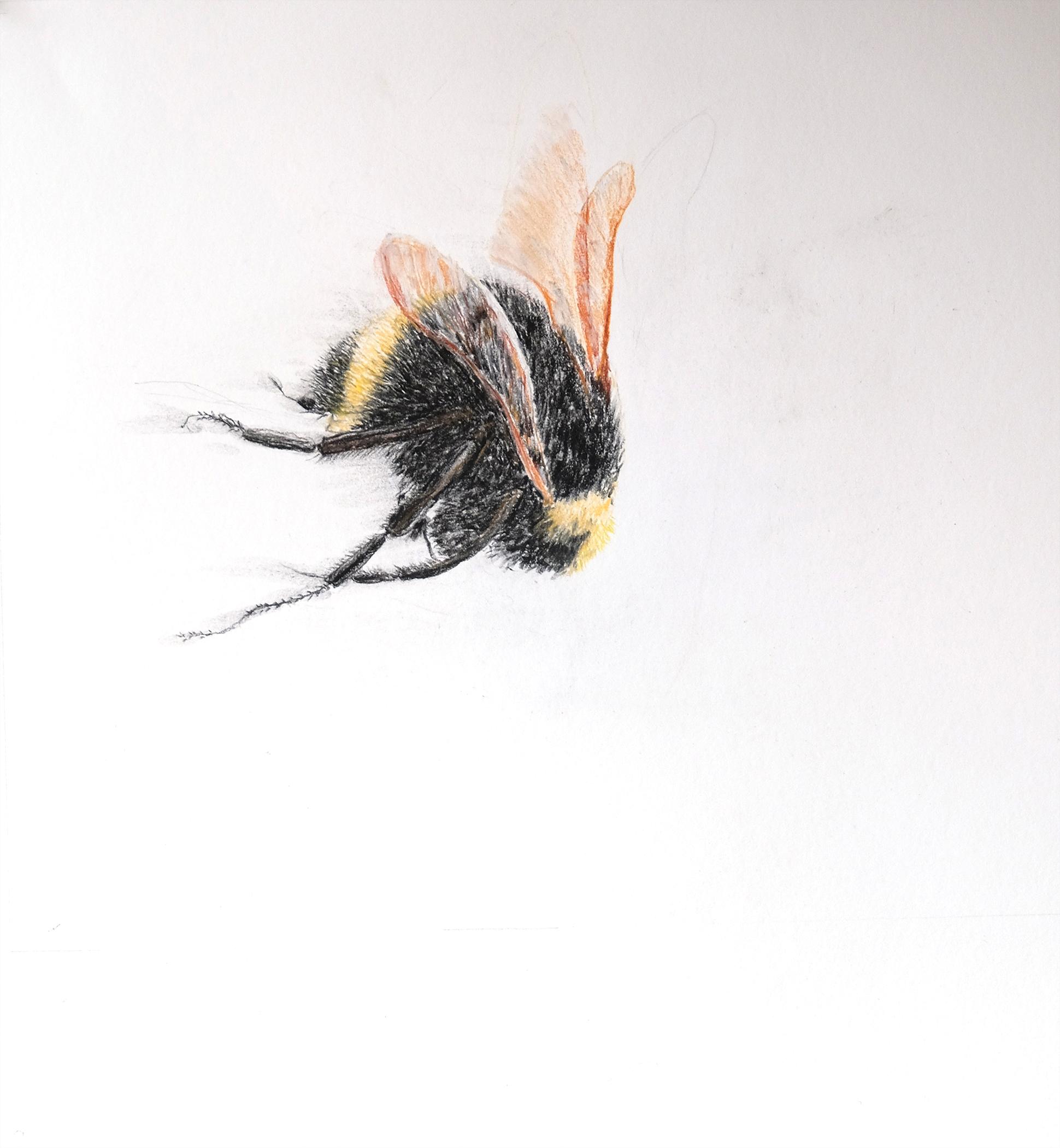 Bumble bee 3.jpg