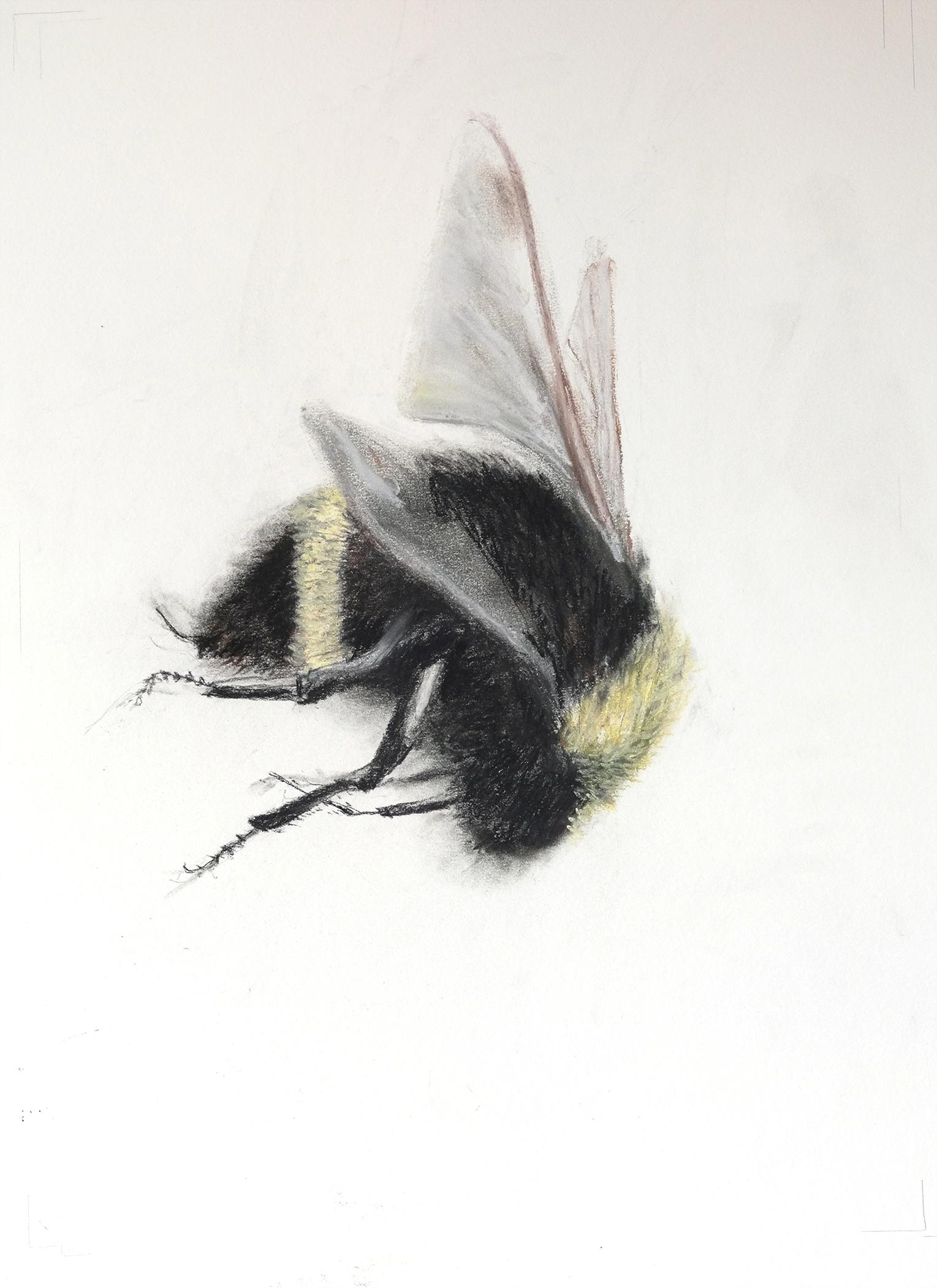 falling Bee 1 small.jpg