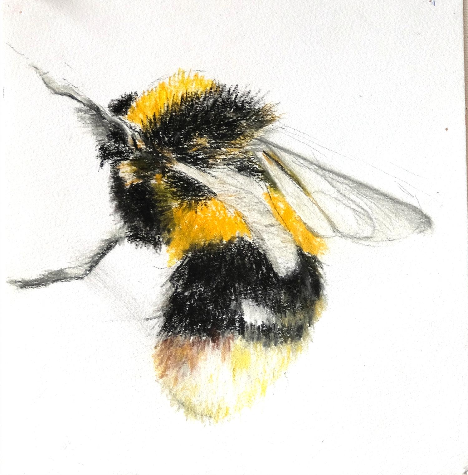 Honey Bee2 small.jpg