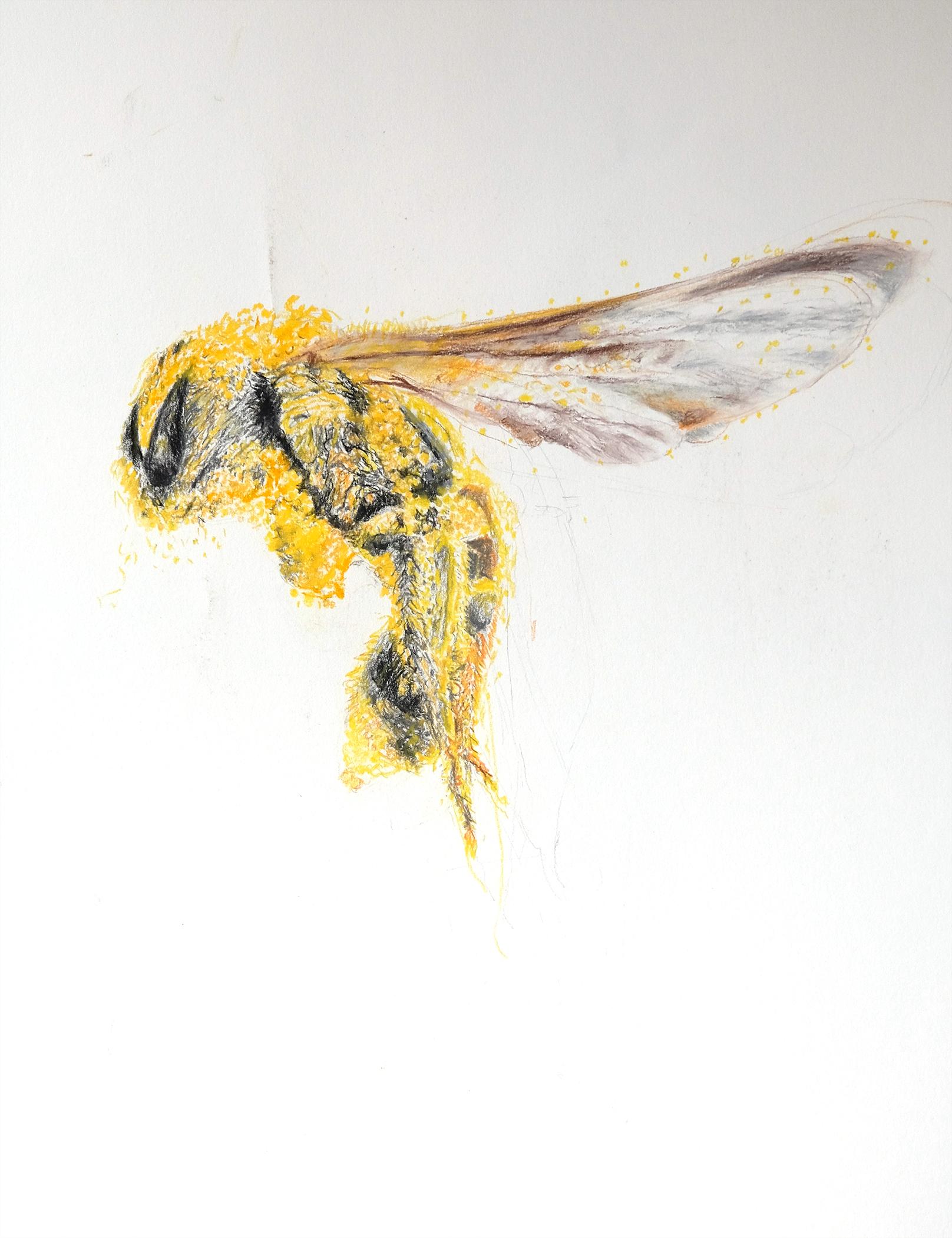 Pollen Bee 2 .jpg