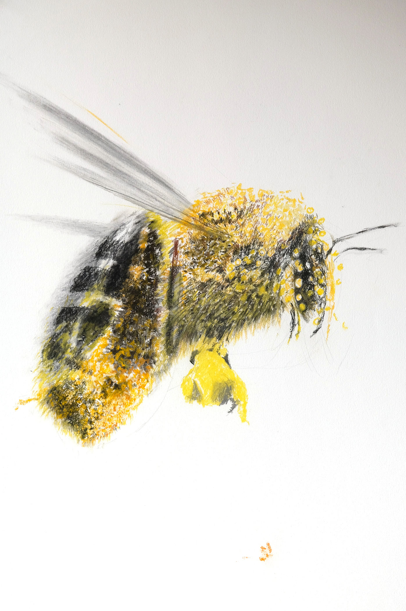 Pollen Bee1 small.jpg