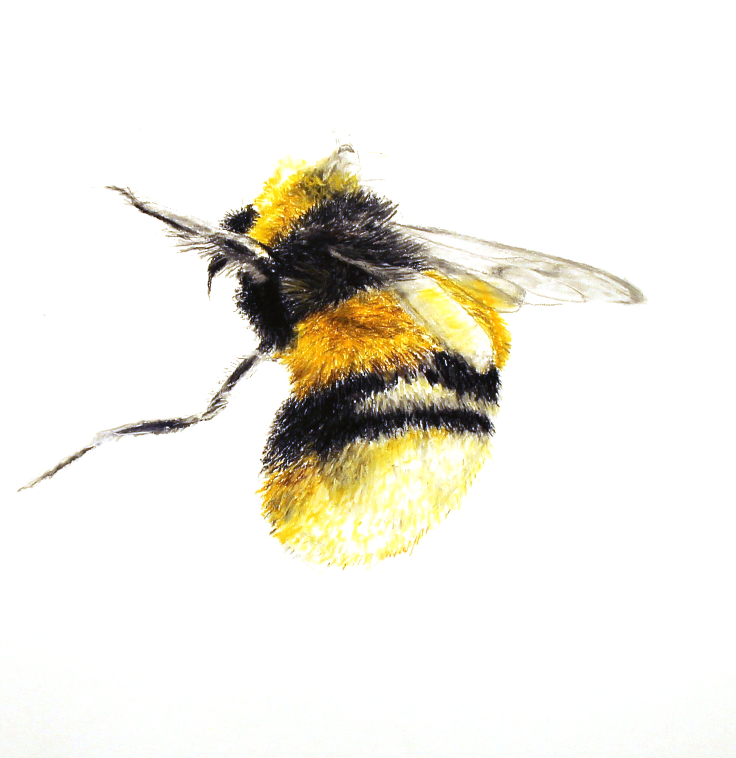 large Bee e mail copy.jpg