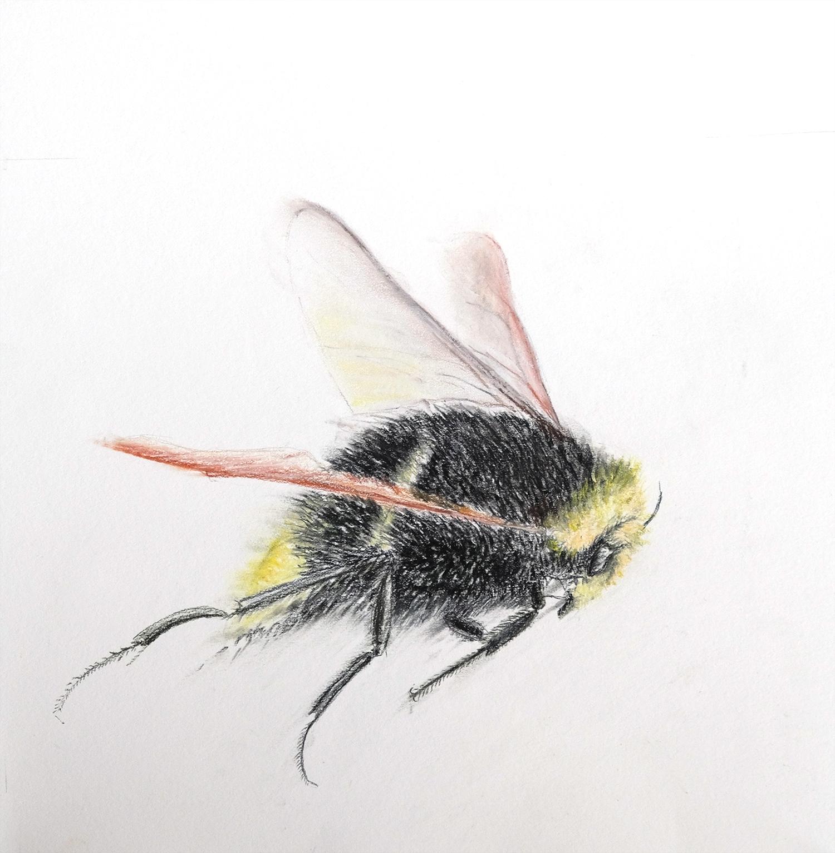 Bumble Bee 1. small.jpg