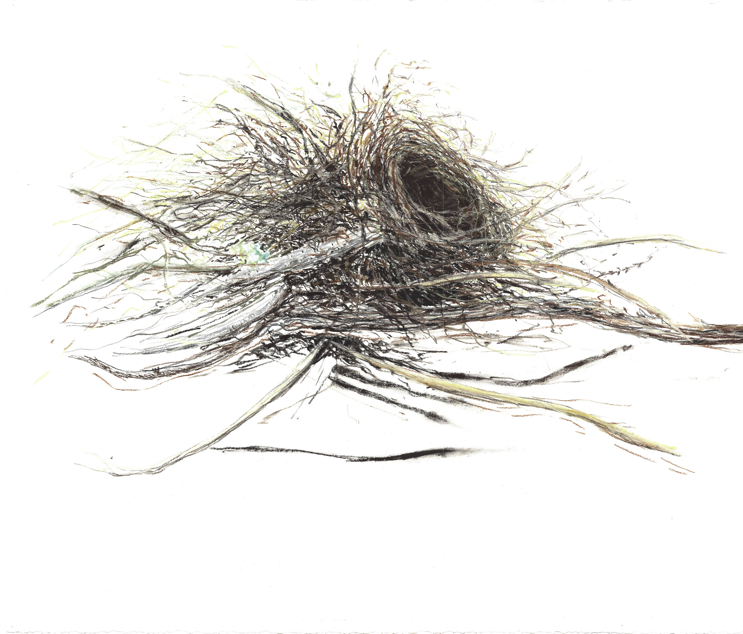 Nests for Website-0006.jpg
