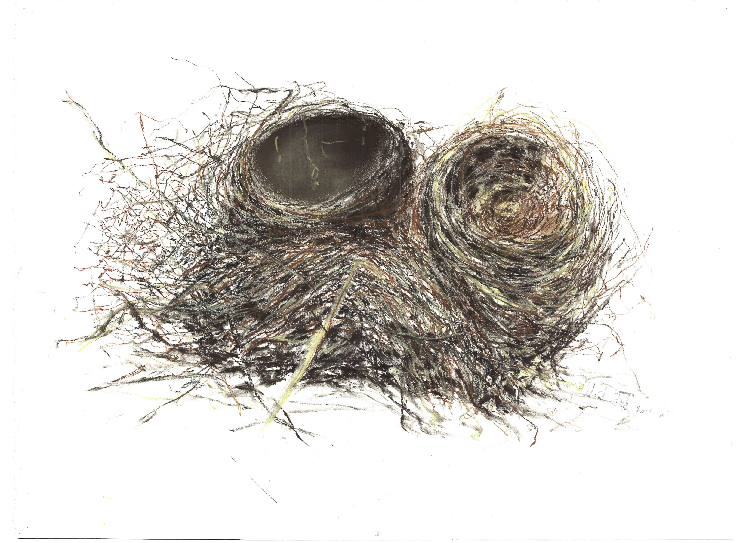 Nests for Website-0011.jpg