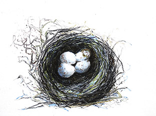 Nests for Website-.jpg