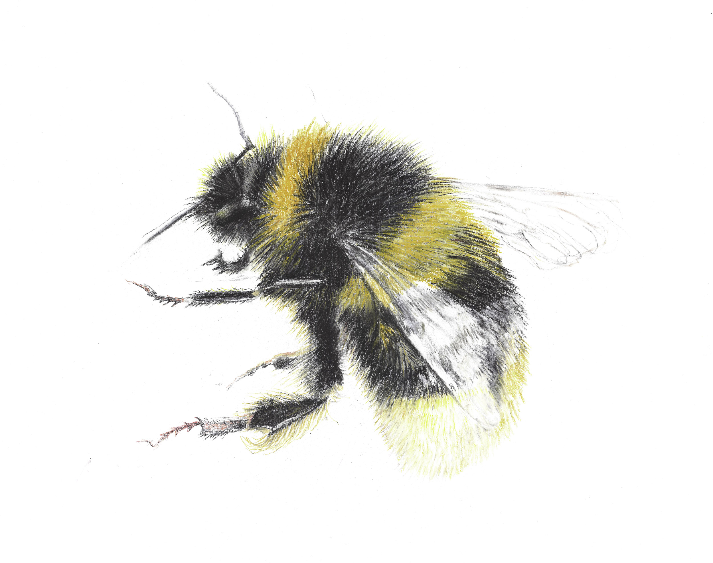 Bumble Bee 2 for Website- copy.jpg