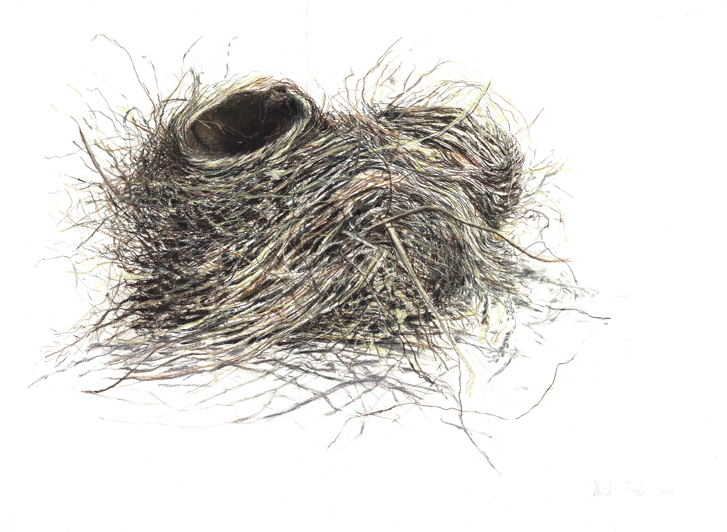 Double Robin Nest-0012-2 for website.jpg
